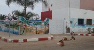 """الناظور…الكلاب تحاصر مدرسة """"اركمان"""" وجمعيات مدنية تدق ناقوس الخطر"""